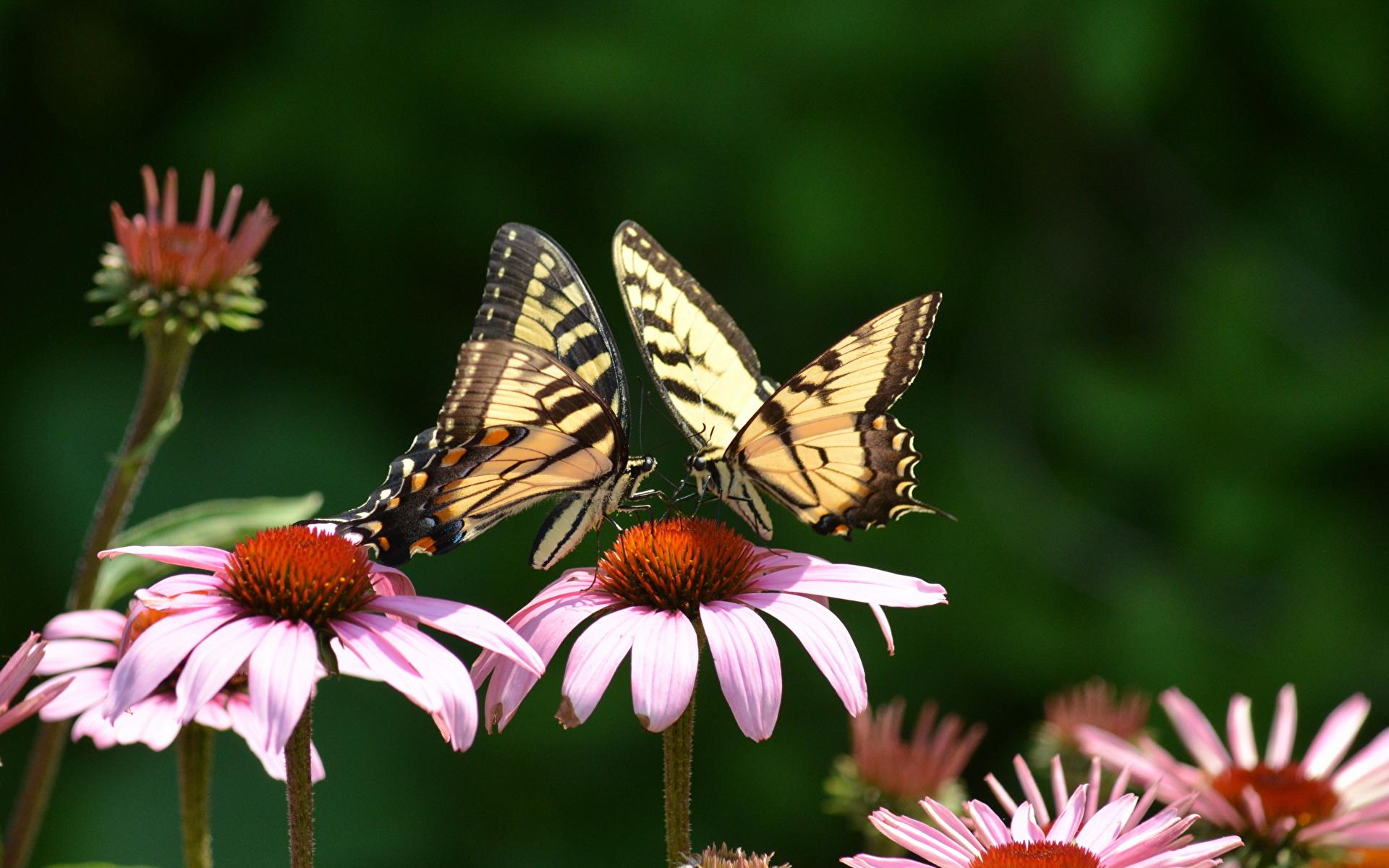 https://s1.1zoom.ru/b5050/918/Butterflies_Insects_438111_1920x1200.jpg