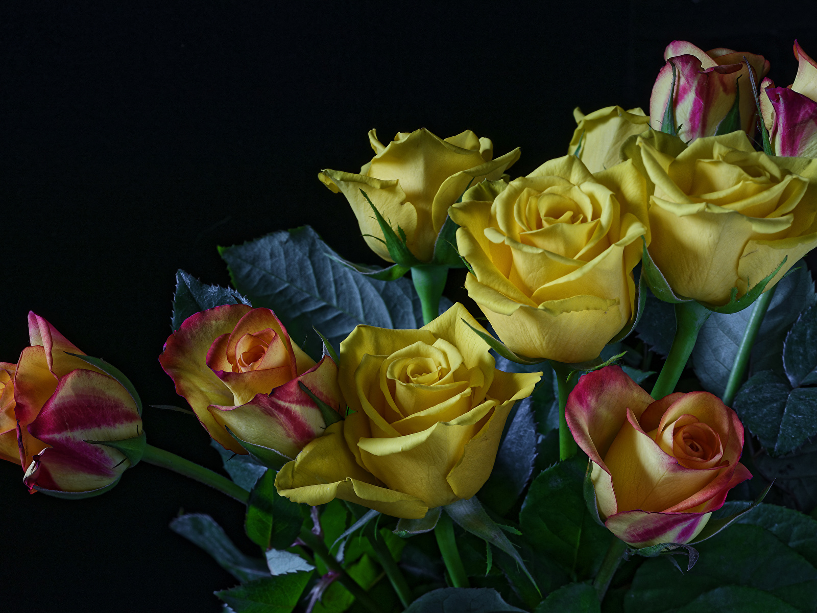 Обои для рабочего стола Розы Желтый Цветы Черный фон 1600x1200 роза желтых желтая желтые цветок на черном фоне