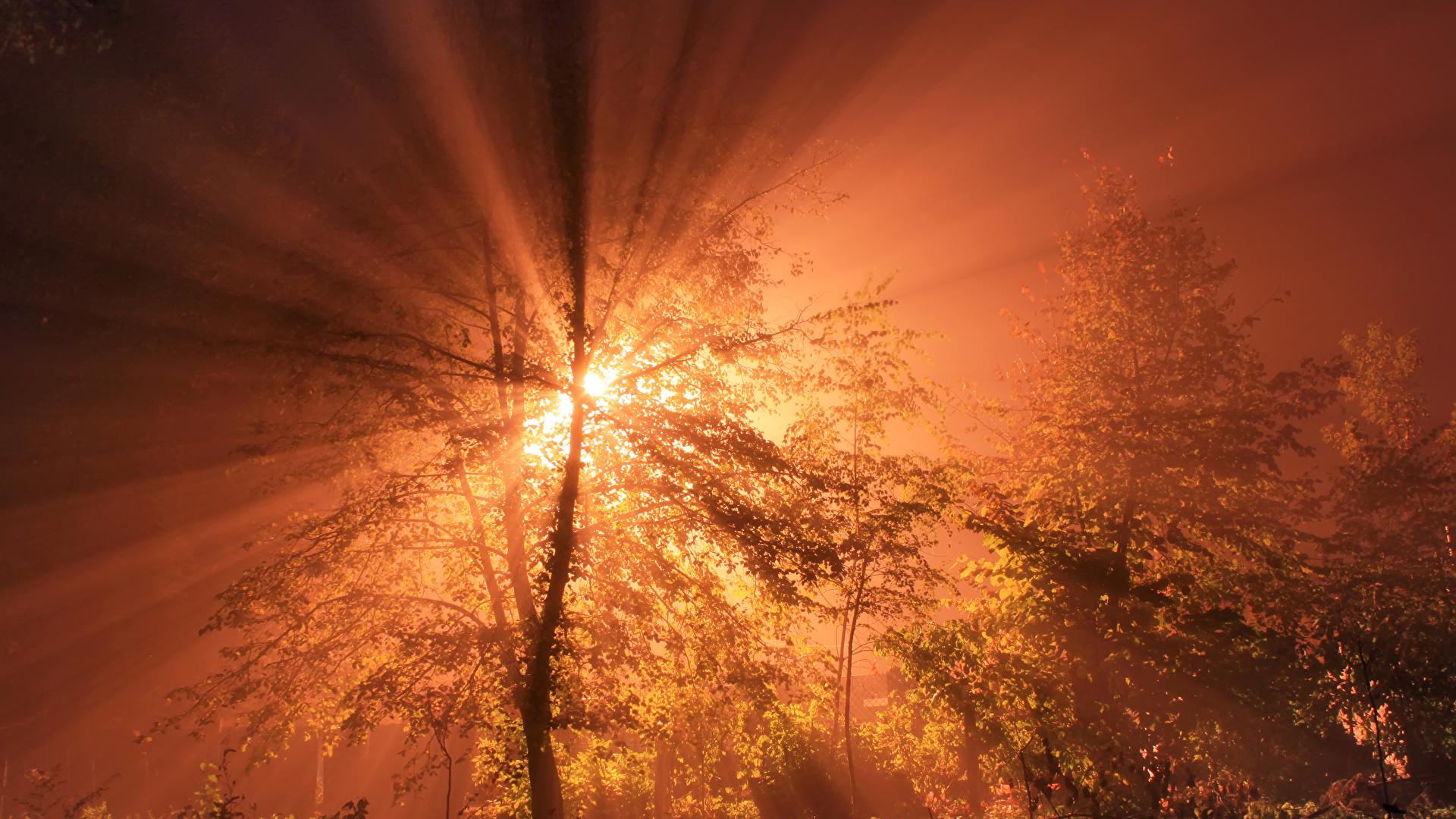 Обои Лучи света Природа Небо Рассветы и закаты 1920x1080
