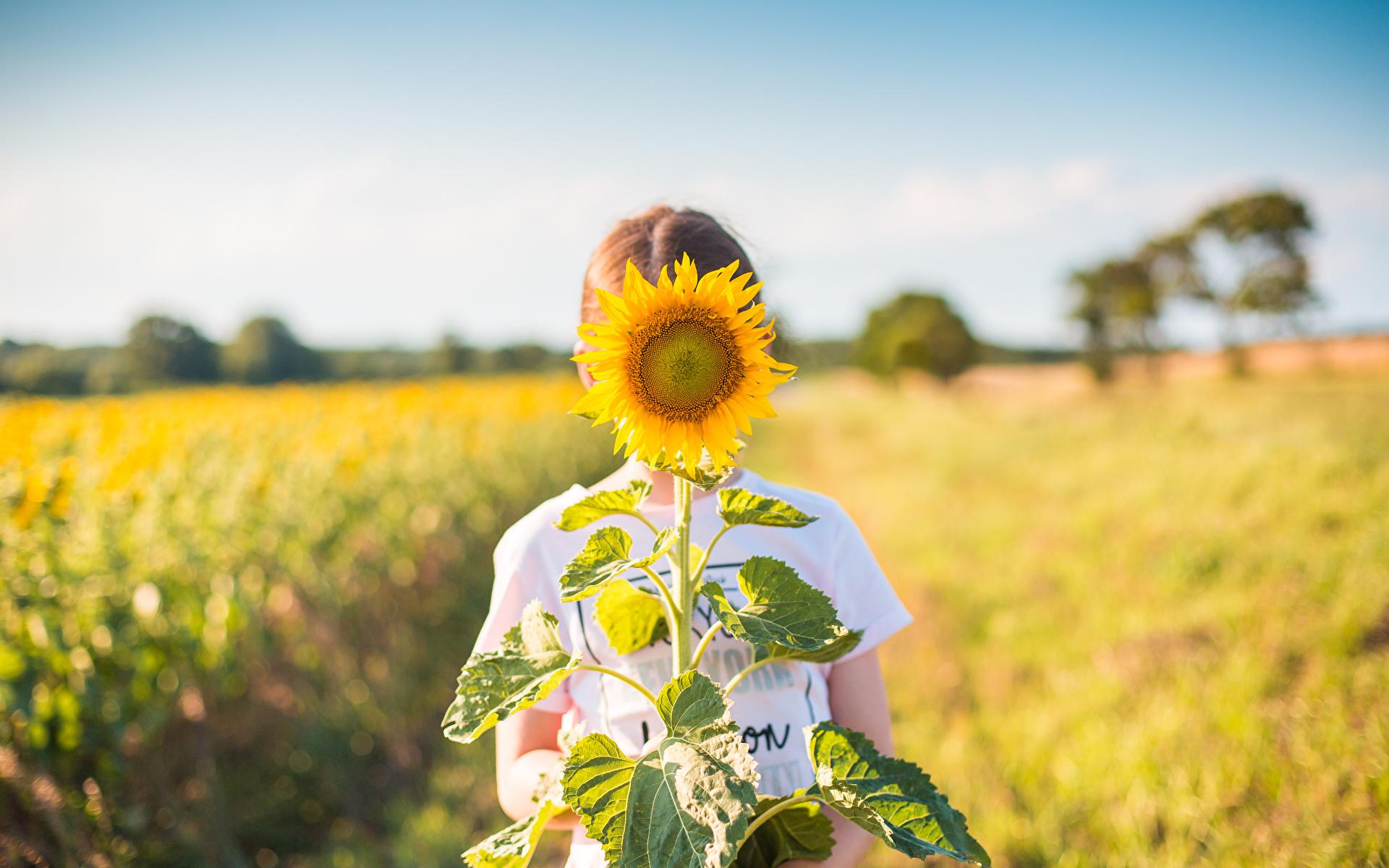 Фотографии Размытый фон Поля Цветы Подсолнечник 1920x1200 боке цветок Подсолнухи