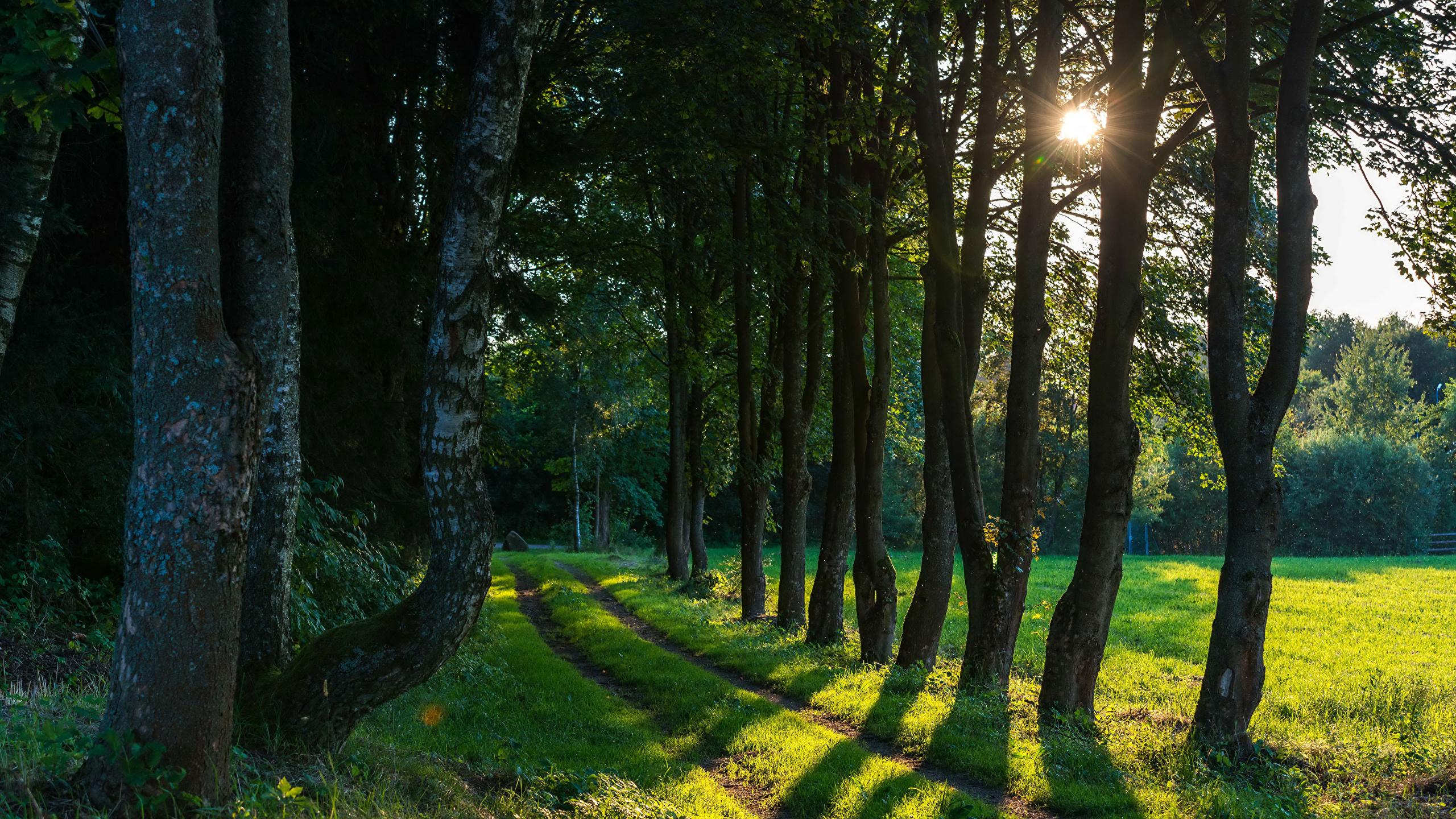Картинки по запросу фото леса и дороги