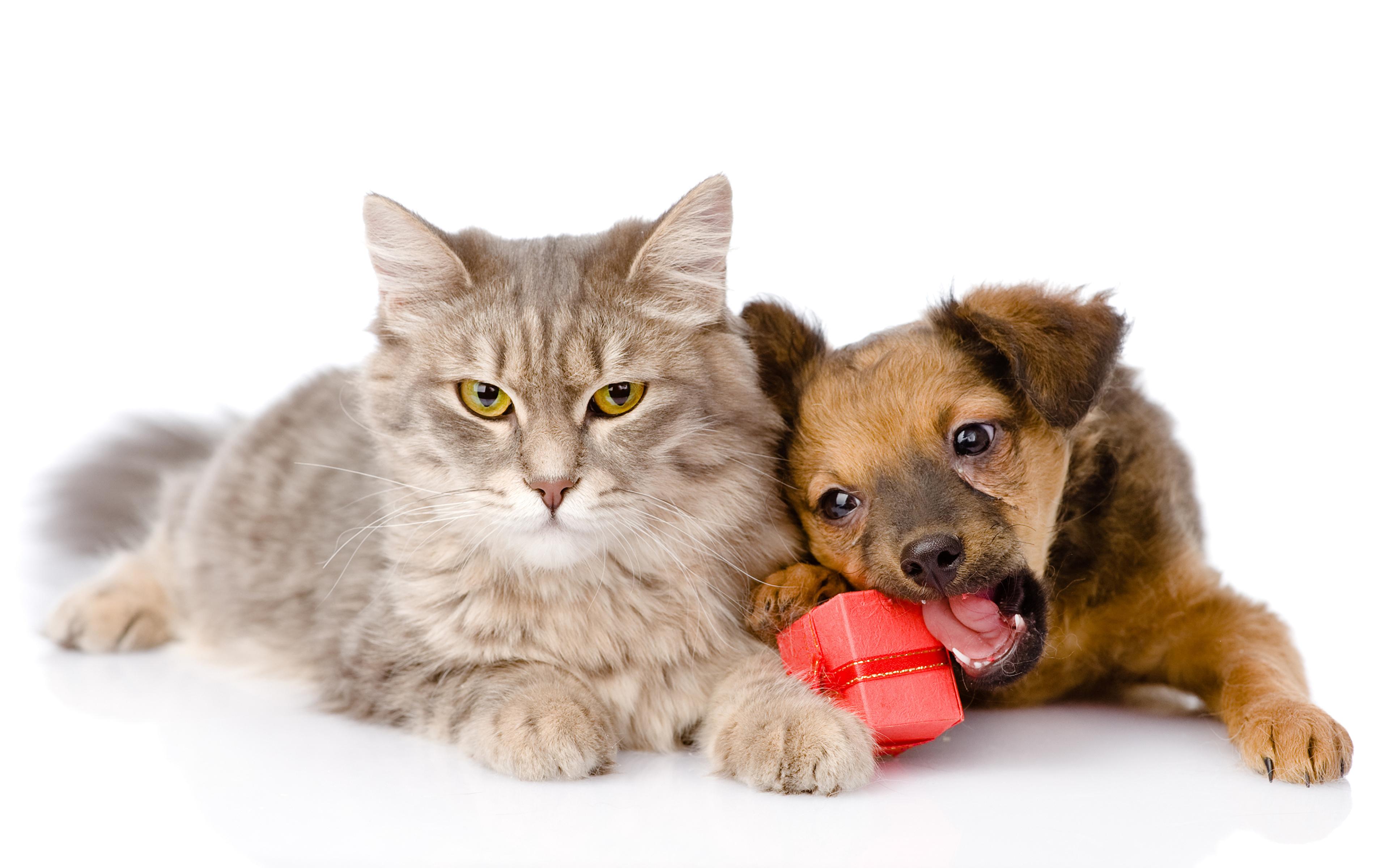 Друзья кот с собакой бесплатно