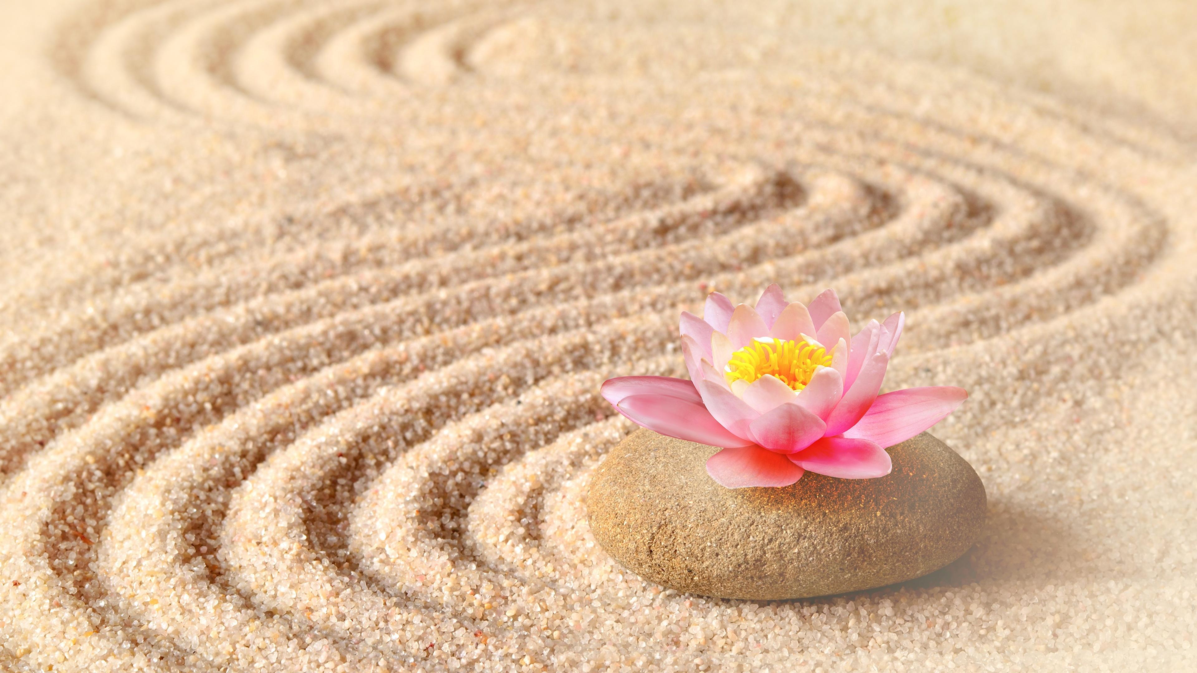 бабочка камень песок подборки