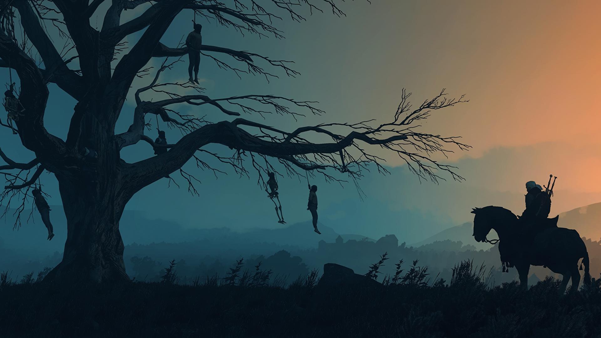 Фотография The Witcher 3: Wild Hunt Лошади Силуэт Игры Ветки Вечер Деревья 1920x1080