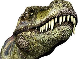 Обои Древние животные Динозавры Тираннозавр рекс Зубы Голова green 3D_Графика
