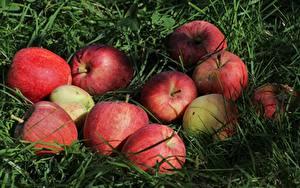 Обои Яблоки Трава Еда
