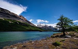 Фотографии Аргентина Горы Озеро Деревья Laguna Hija