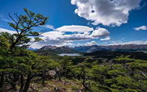 Фото Аргентина Гора Небо Деревья Облачно El Chalten, Patagonia Природа
