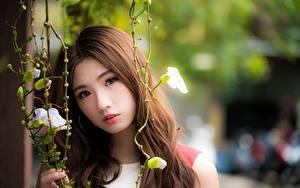 Фото Азиатка Размытый фон Шатенки Взгляд Девушки