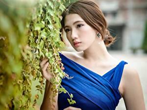 Фотография Азиатка Размытый фон Шатенки Смотрит Кусты молодые женщины