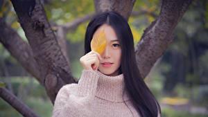 Фотографии Азиатки Размытый фон Смотрит Брюнетки Свитер Руки Листья Девушки