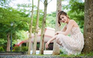 Обои Азиатки Боке Позирует Сидящие Платья Шатенки Смотрит девушка