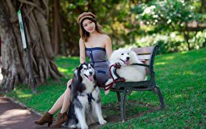 Обои Азиаты Собака Платья Скамья Берет Сидит молодые женщины Животные