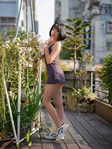 Картинка Азиатки Платья Ног Позирует Взгляд Девушки