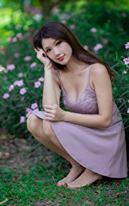Обои для рабочего стола Азиатки Сидящие Платья Смотрит Шатенки девушка