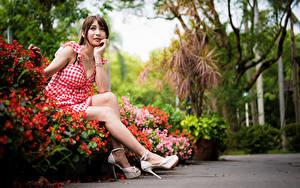 Картинки Азиаты Сидит Платье Ног Смотрит Шатенка Девушки
