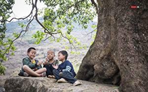 Обои для рабочего стола Азиаты Три Мальчики Сидит Лысый Ветвь Дети