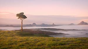 Обои Австралия Побережье Дерево Тумане Maleny
