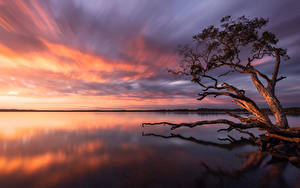 Фотография Австралия Озеро Рассвет и закат Дерево Lake Weyba