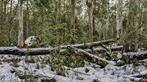 Картинки Австралия Парк Лес Зима HDR Снег Деревьев Barrington Tops National Park Природа