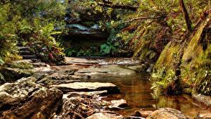 Фотографии Австралия Водопады Камни Мох Ручей Wentworth Falls Природа