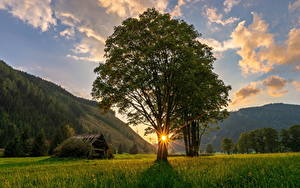 Картинка Австрия Гора Рассветы и закаты Лучи света Дерева Траве Ramsau