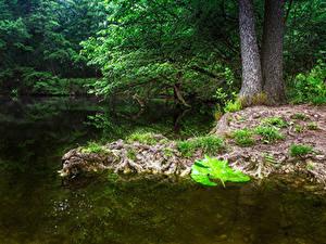 Картинки Австрия Вена Парки Пруд Деревья Природа