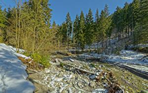 Фото Австрия Зимние Леса Альпы Снег Ель Tyrol Природа