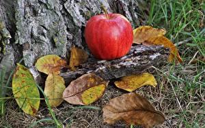 Картинка Осень Яблоки Листья Еда