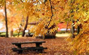 Фотографии Осень Ветки Клёна Боке Скамейка