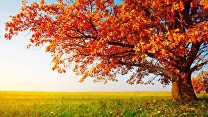 Обои Осень Поля Дерева Ветка Трава Природа