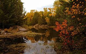 Обои Осень Леса Озеро Природа