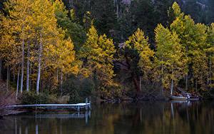 Картинка Осень Леса Озеро Причалы Природа