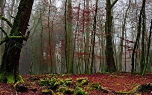 Обои Осень Леса Мох Тумане Дерево Природа