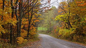 Фотографии Осенние Лес Дороги Америка Дерева Nelson County, Virginia Природа