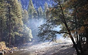 Фотографии Осенние Леса Камень Штаты Парки Йосемити Дерево