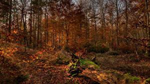 Фотографии Осень Леса Деревья Листва