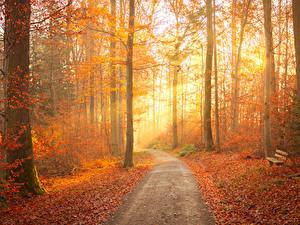 Картинка Осенние Лес Дерево Тропинка Листва Скамья Лучи света