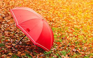 Обои для рабочего стола Осенние Трава Листва Зонт Красный Природа