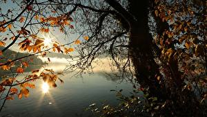 Фото Осенние Озеро Дерево Ветка Листья