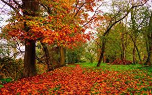 Фото Осенние Дуб Деревья Листья Природа