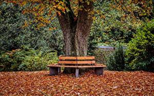 Картинка Осень Парк Скамейка Лист Ствол дерева Природа