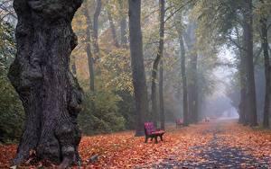 Фотографии Осень Парки Тумана Аллеи Листва Природа