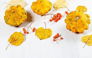 Фотография Осенние Тыква Ягоды Белом фоне Листва Пища