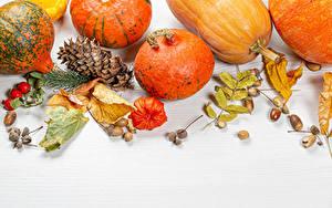 Картинка Осенние Тыква Белом фоне Шишка Листва Шиповник плоды Природа