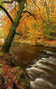 Обои для рабочего стола Осень Реки Деревья Лист Природа