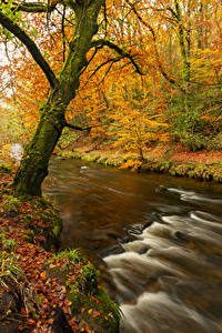 Фото Осень Реки Деревья Лист