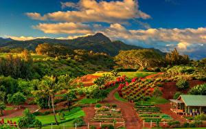 Картинки Осенние Пейзаж Поля Горы Небо США Гавайские острова Облака Пальмы Kauai Природа