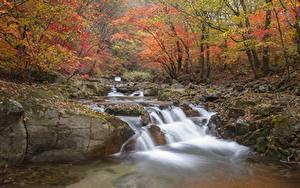 Картинка Осень Камни Мох Ручеек Листья Природа