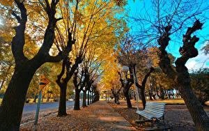 Фотографии Осенние Дерево Скамейка Лист Уличные фонари Аллея